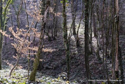 Réveil de la forêt
