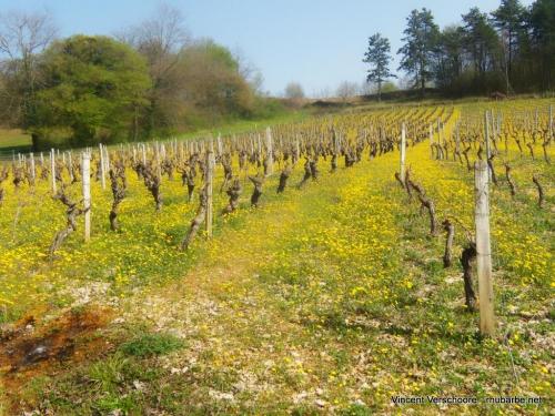 Vignobles de Bray