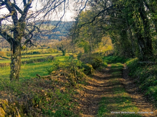 Campagne clunisoise