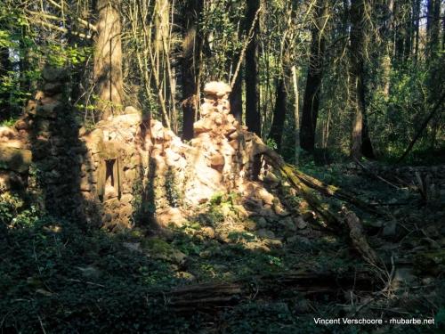 Ruines, forêt de Donzy