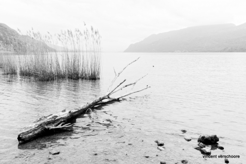 Lac du Bourget, N&B