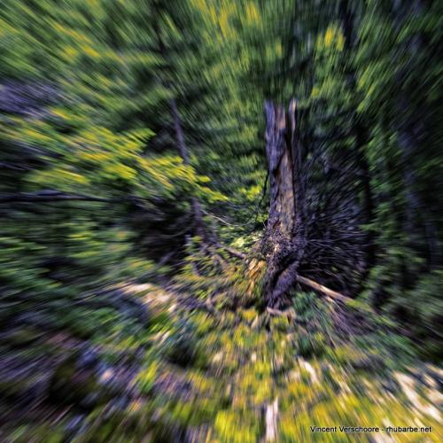 York Mallory, rush dans la forêt.